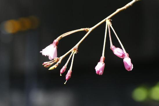 04.つぼみ1.JPG