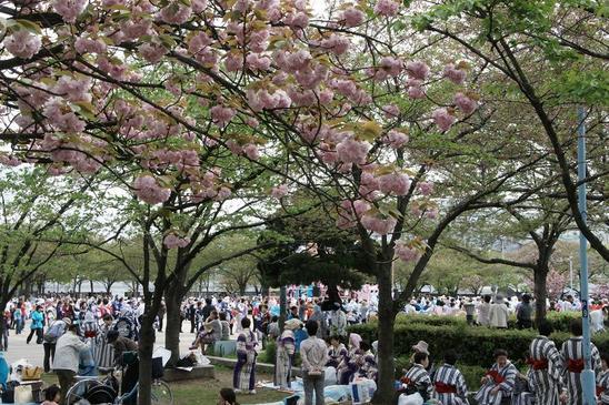 公園の民謡踊り会2.JPG