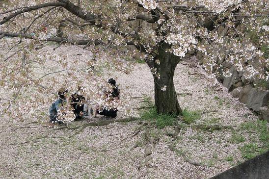 大阪城の桜1.JPG