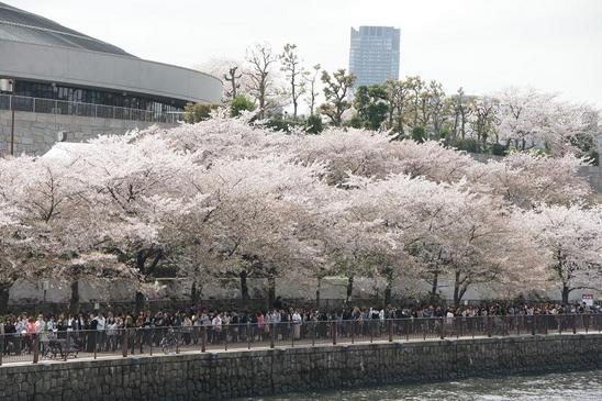 大阪城の桜2.JPG