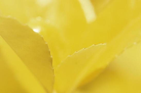 4.黄色の名前不明の花a.JPG